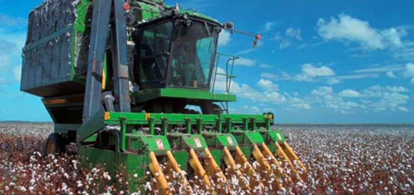 cosechadora algodon